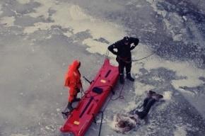 Установлена личность женщины, найденной во льдах Невы