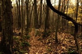 Гендиректор одной из фирм спрятал труп изрубленного прессом мигранта в лесу