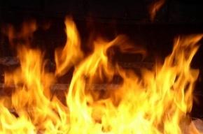 Мужчина сгорел  в Гатчинском районе Ленобласти