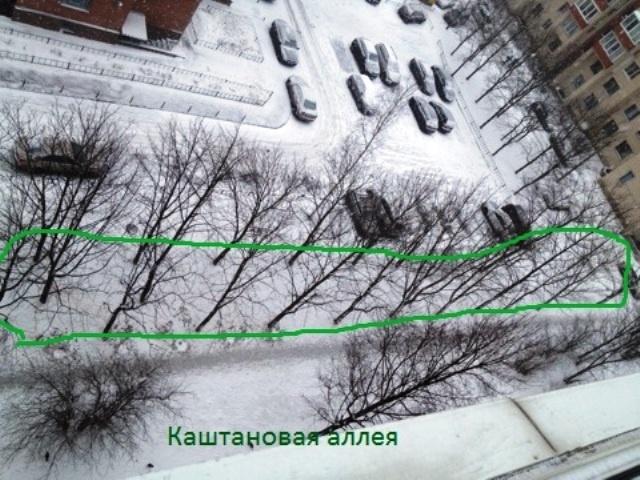 """фото: """"Живой город"""""""