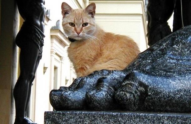В «Республике кошек» раздадут рыжих эрмитажных котов