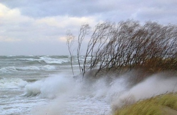 В Ленобласти ожидается усиление ветра