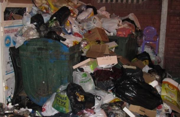 Жители дома №3 по Заячьему переулку жалуются на мусорную свалку во дворе дома