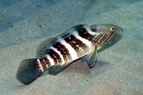 Россельхознадзор не пустил 17 тонн диетической рыбы
