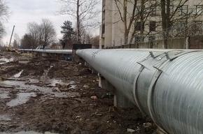 В Приморском районе под трубами теплотрассы нашли полуразложившийся труп