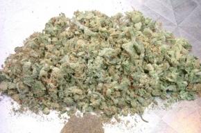 Плантацию марихуаны уничтожили в поселке Выра