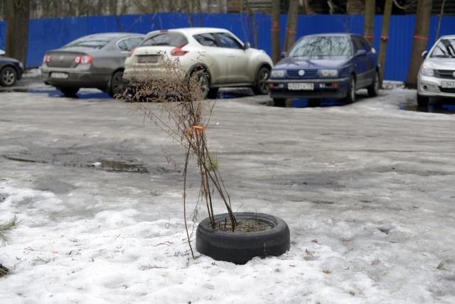 Сквер на ул. Гаврской 8, фото: Сергей Ермохин: Фото