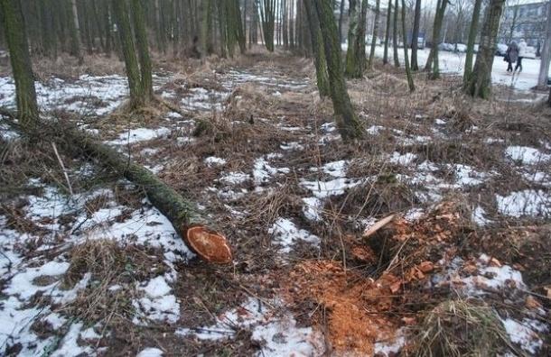 В парке Александрино незаконно вырубают деревья