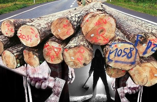 Дорога в Сосновый Бор нужна, но кому-то мешает