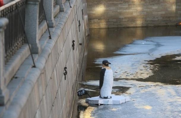 На канале Грибоедова плавал королевский пингвин