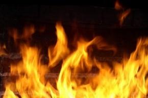 Хозпостройка сгорела в Пушкинском районе