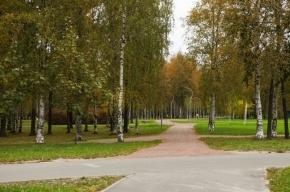 Пригороды Петербурга становятся комфортнее