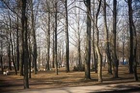 Коммунальные службы займутся озеленением города