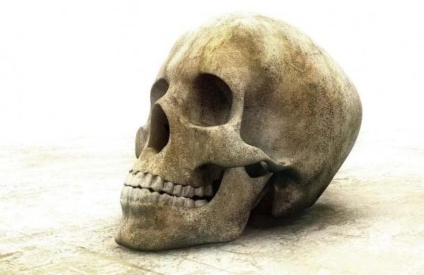 В поселке Металлострой нашли человеческий череп в полиэтиленовом пакете