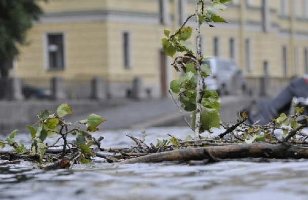 МЧС: с полудня в Петербурге ожидается усиление ветра