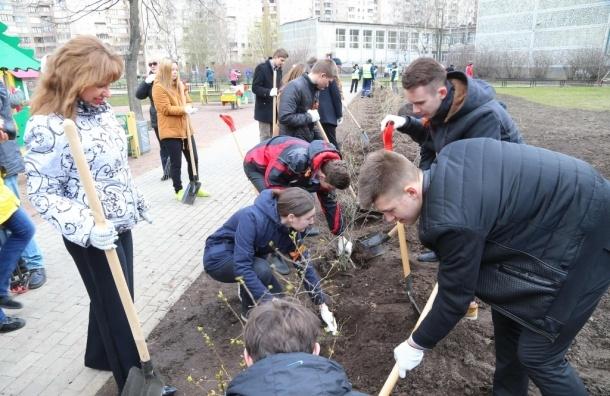 В Петербурге на субботник в День благоустройства вышли 260 тысяч горожан