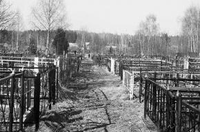 Между могил на одном из кладбищ в Ленобласти нашли женский труп с ожогами