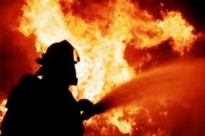 Сразу шесть домов сгорело в одной из деревень Ленобласти