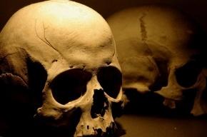 В ЦПКиО им Кирова обнаружили человеческий череп