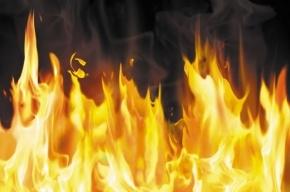 Петербурженку спасли спасли из горящей квартиры на  Индустриальном проспекте