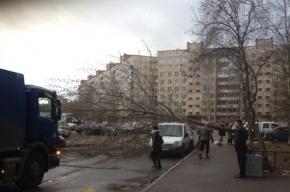 На проспекте Энтузиастов упавшее дерево повредило два автомобиля