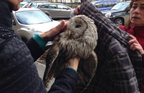 В центре Петербурга спасли сову