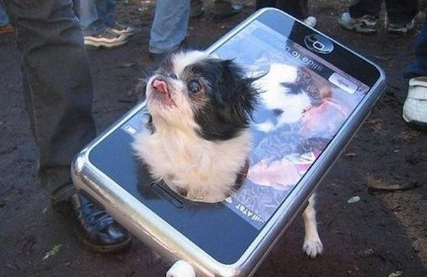 В Москве и Петербурге запустили мобильное приложение для владельцев собак