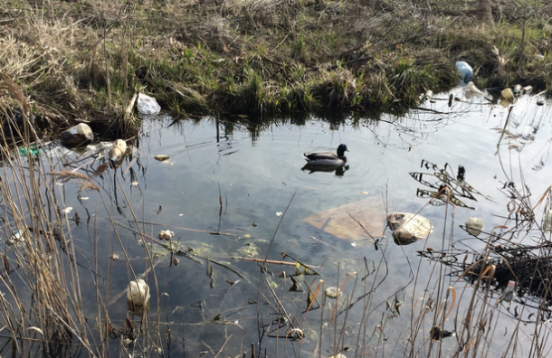 Активисты обнаружили в Шушарах несанкционированные свалки