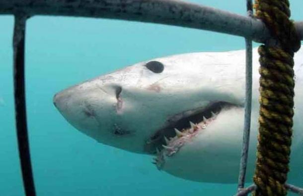 На Гавайях 65-летняя пенсионерка погибла от нападения акулы