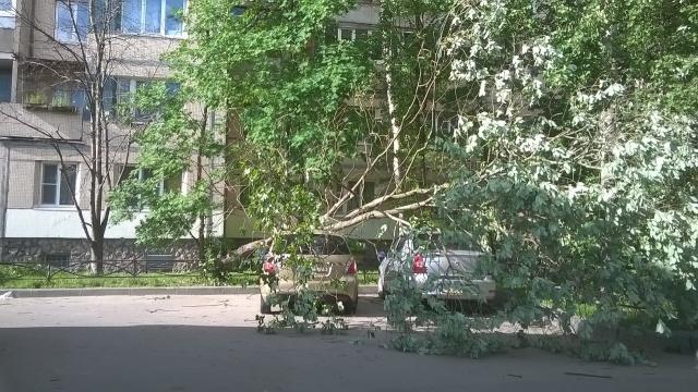 Ветер в СПб, 3.06.15: Фото