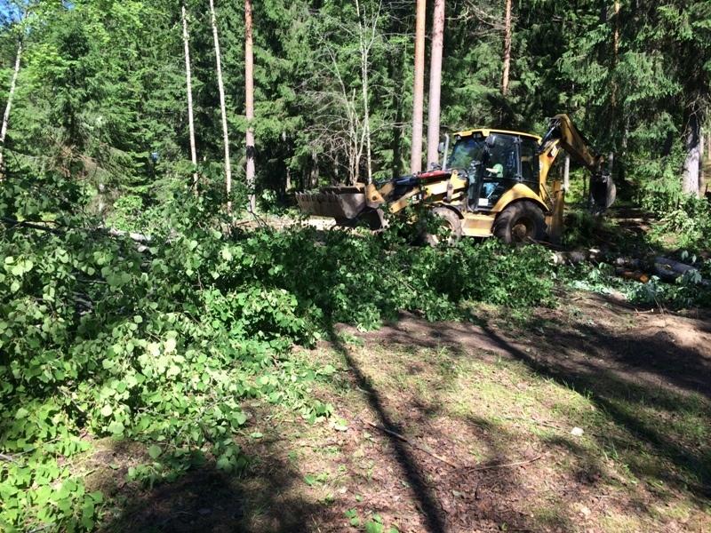 Рабочие уничтожают лес