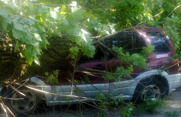 Ветер в Петербурге продолжает валить деревья