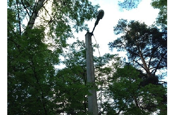 Петербуржцы требуют восстановить освещение в Пискаревском парке