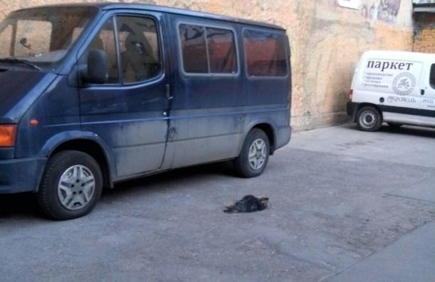 Петербургская прокуратура проверяет смерть собаки, выброшенной с четвертого этажа