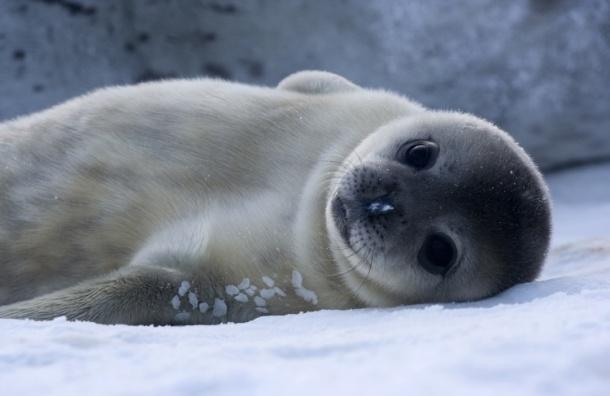 В Центре сохранения морских млекопитающих дали имена двенадцати питомцам