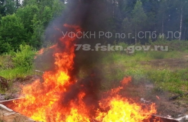 Под Петербургом уничтожили больше 200 кг наркотиков