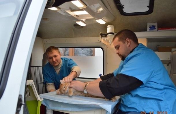 Скорая помощь для братьев меньших открылась в Петербурге