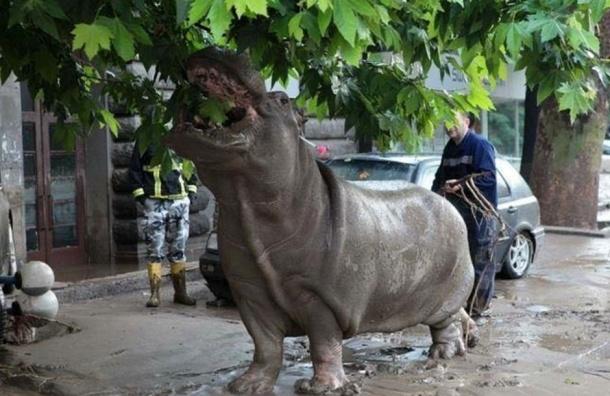В Грузии сегодня объявлен день траура по жертвам наводнения