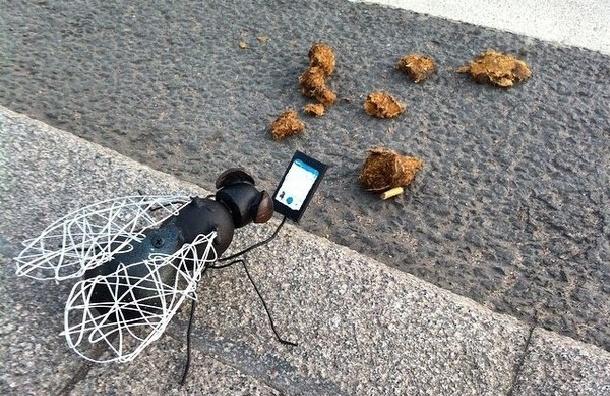 В Петербурге возник «памятник» мухе, которая фотографирует свой обед