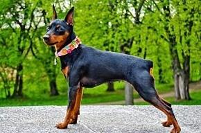 В Петербурге за выгул собак на детских площадках предусмотрен штраф