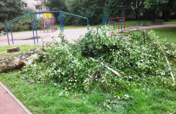 В Выборгском районе вырубили часть сквера