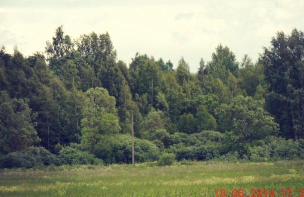 В Ленобласти участок города-спутника «Южный» приватизирован незаконно