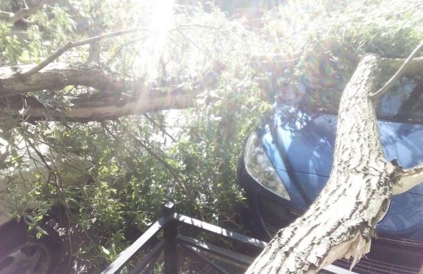 Очевидцы: в Кировском районе на машину упало дерево