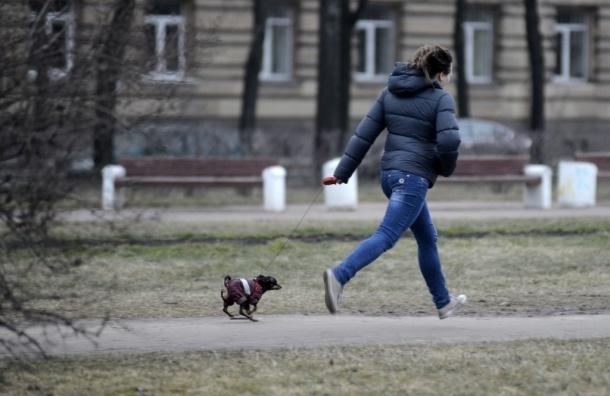 Выгул собак в Петербурге: безответственность или обстоятельства