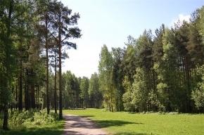 В парке Сосновка горожане обнаружили тело велосипедиста