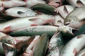 В Петербург не пустили подозрительную корейскую рыбу