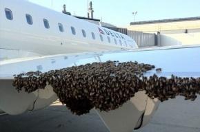 Рой пчел атаковал пассажирский «Аэробус», который готовили к рейсу в Петербург