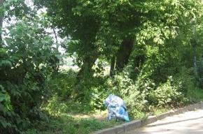 В Купчино нашли два пакета с разрубленным телом женщины