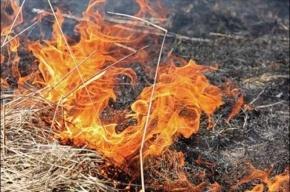 Петербуржец скончался от ожогов, сжигая траву у себя на даче