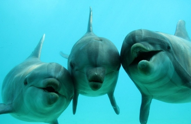 Всемирный день китов и дельфинов: 29 лет назад был введен запрет на китовый промысел